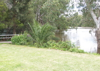 4 Bedroom home on the Murrumbidgee River in HAY NSW