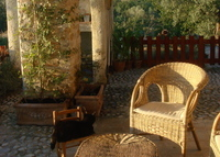 Beautiful traditional farmhouse in olive grove, one hr. north of Rome.
