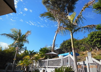 Tropical Backyard Paradise!  Bring the pets.  Pool, deck, spa, garden