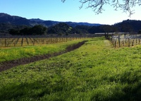 Sleep 5 in the heart of Yountville, Napa Valley!