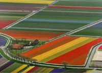 Famous Tulip fields only 7 mins away, 30 mins to Amsterdam, and beach