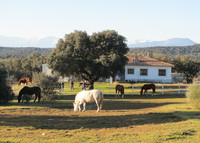 Lovely farm in sunny Spain (Toledo) with horses, pool, landscape