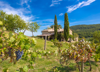 Luxury countryside villa in Tuscany's most exclusive area (A/C + WIFI)