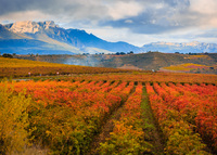 LA RIOJA (SPAIN): WINE, HISTORY, CULTURE & GASTRONOMY